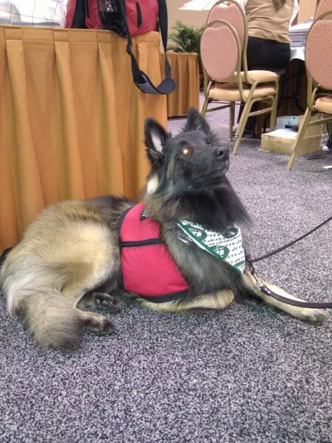 Coolest Dog at 2011 NAVC