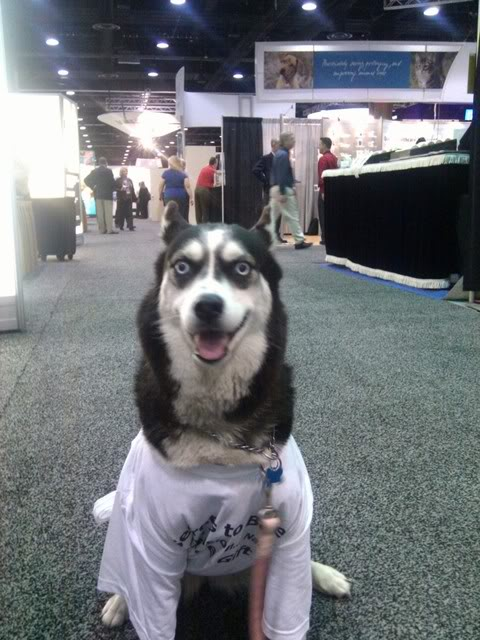 Check-out-this-dog-in-a-tshirt