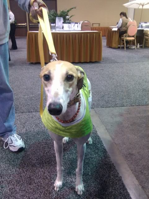 Greyhound-Dog-rescue-at-the-VetHubs-booth