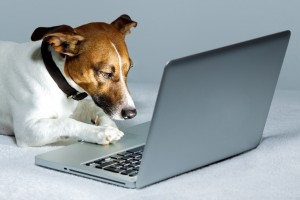 Why is Great Web Design Important for Veterinary Care? Three Facts