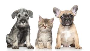 veterinary websites