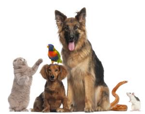 social media for veterinarians